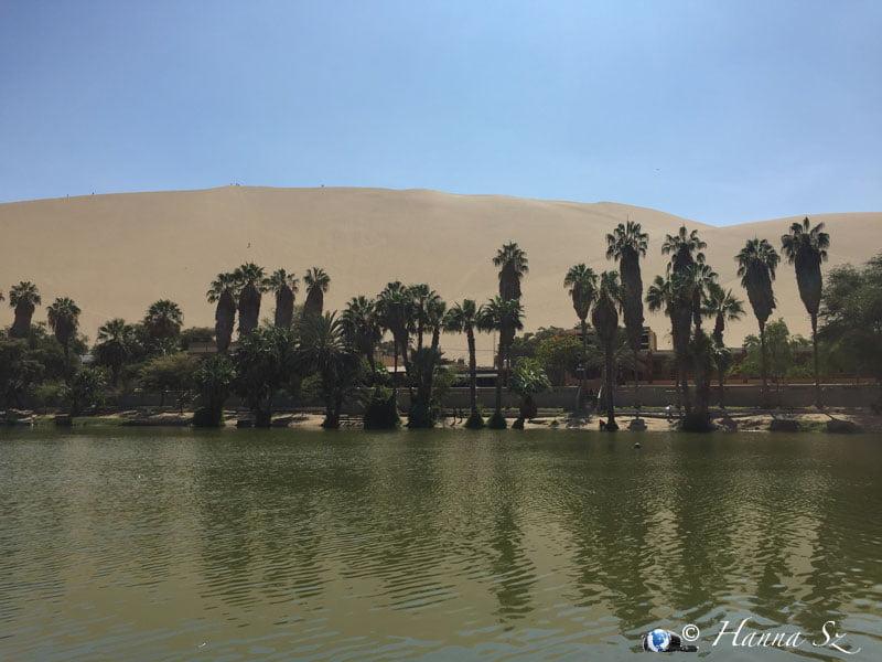 Palme e deserto